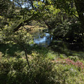 写真: 湯川が現れました~