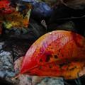 写真: 我が家の秋色?