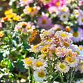 写真: お花の中に枯葉が!(^▽^)/