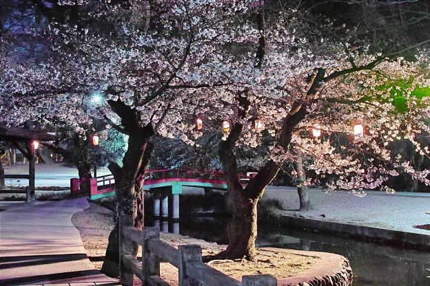夜桜2019(2)