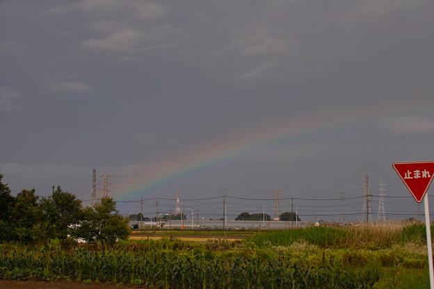 雨の置き土産!(^▽^)/