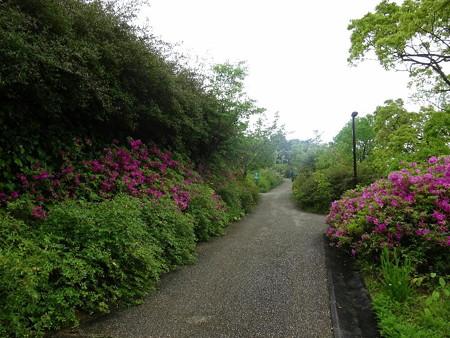 180425-01モネの庭
