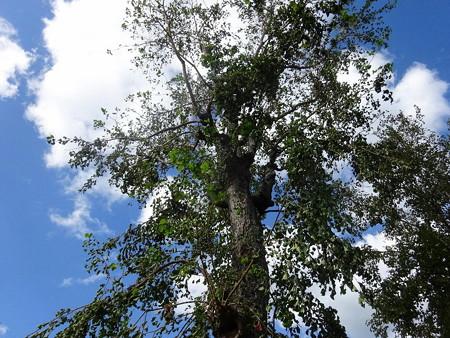 181020-1樹
