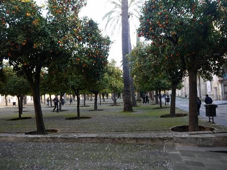 190108-05オレンジの中庭