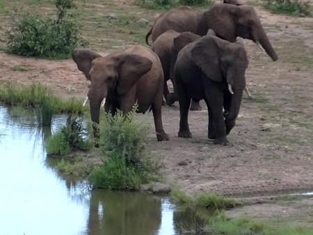 190221-23象