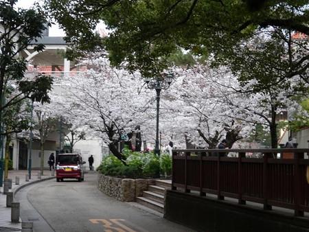 190402-28花の道