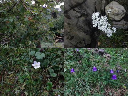 190910-11花々