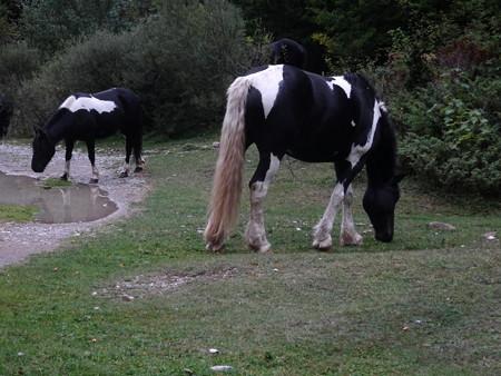190910-16牛模様の馬