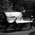 写真: 昼下がりのベンチ