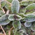 写真: 霜の朝