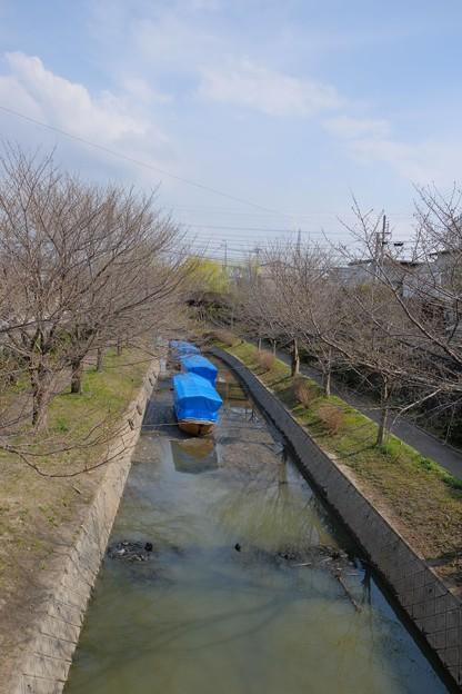 桜並木と十石船はまだお休み