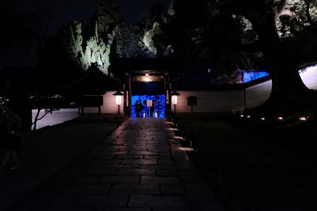 京の夜青き光に誘われて