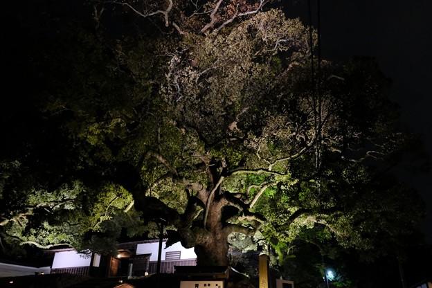 巨木が目印の青蓮院