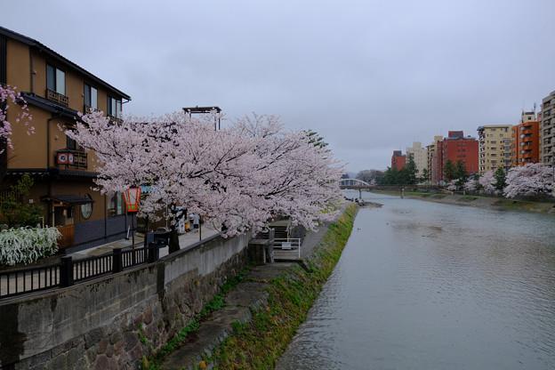 雨の浅野川1