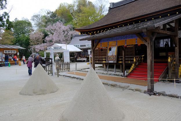 拝殿の立砂とみあれ桜も入れて