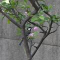 写真: ハナカイドウ四十雀