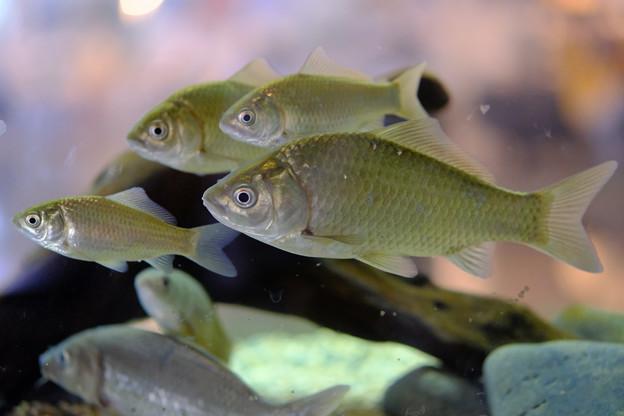水槽のお魚