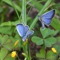 写真: 青と青