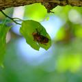 写真: 空蝉