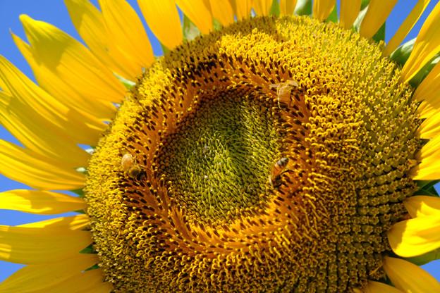 蜂たちに大人気