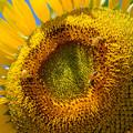 写真: 蜂たちに大人気
