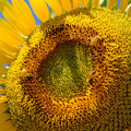 Photos: 蜂たちに大人気