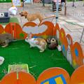 写真: 犬うさぎ亀モルモット