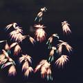 晩秋の花火4
