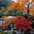 7紅葉に囲まれた縁結びの松