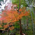 紅葉と竹林と