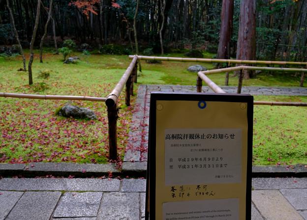 2高桐院拝観休止のお知らせ