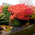 相国寺方丈の庭2