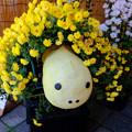 Photos: 亀菊人形