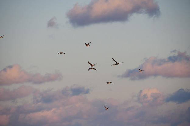 夕方の海集団飛翔2