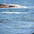 夕方の海(ウミネコ飛ぶ)