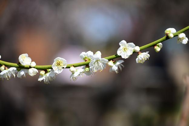 Photos: 新茶青