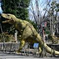 Photos: いつものティラノザウルス