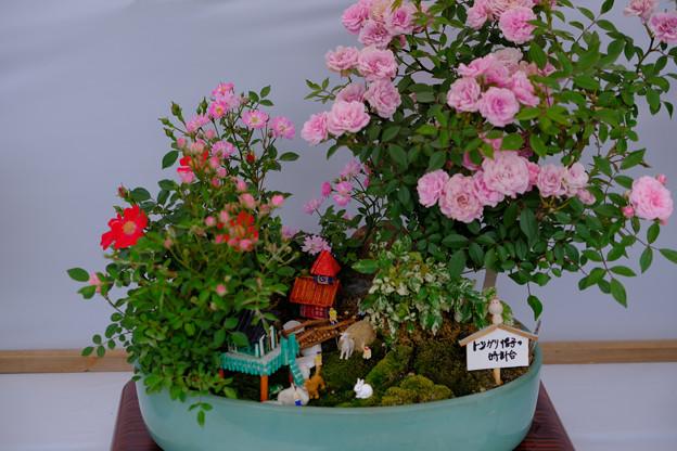 ミニバラ盆栽「トンガリ帽子の時計台」