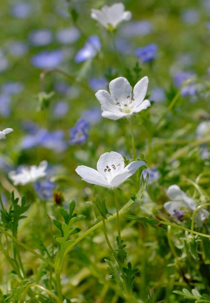 Photos: 白花も