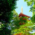 Photos: 新緑から初夏へ