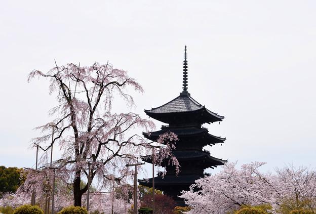 2016年4月東寺