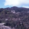 Photos: 嵐山2