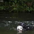 Photos: 泳ぐ1