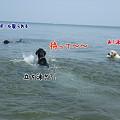 Photos: 花初泳ぎ2