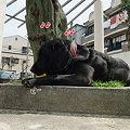 Photos: 変な犬です