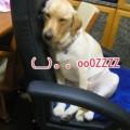 Photos: 画像 1212 Web 表示用 (中)