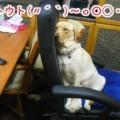 Photos: 画像 1215 Web 表示用 (中)