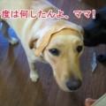 Photos: 画像 939 Web 表示用 (中)