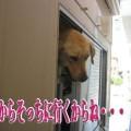 Photos: シャンプー9