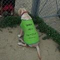Photos: 盲導犬候補のパピー